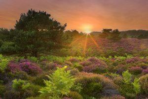 Sunset over heathland, Arne RSPB reserve, Summer 2009