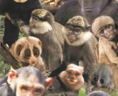 Monkey World welcomes 12 new primates, in time for Christmas
