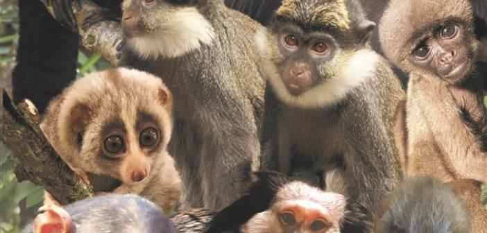 The 12 primates
