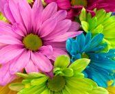 LEISURE: Beginners Flower Arranging Class
