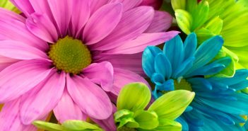 image of bright colourful flowers
