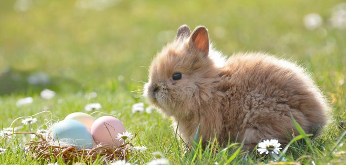 image of bunny in a field with some easter eggs