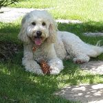 photo of holly the dog