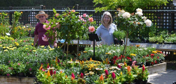 Cherry tree Nursery plant flower sales