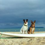 photo of dogs evie & ralph