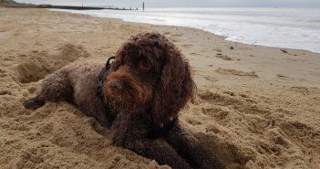 Baxter on the beach