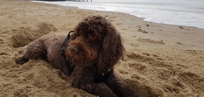 Baxter on the beach